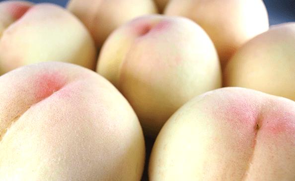 岡山清水白桃